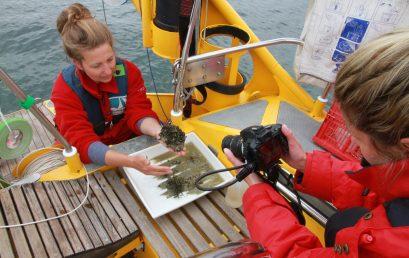 mikro makro mint – Digitaler Forschungseinsatz auf dem Bodensee